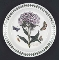 Portmeirion Botanic Garden Sweet William Salad Plates